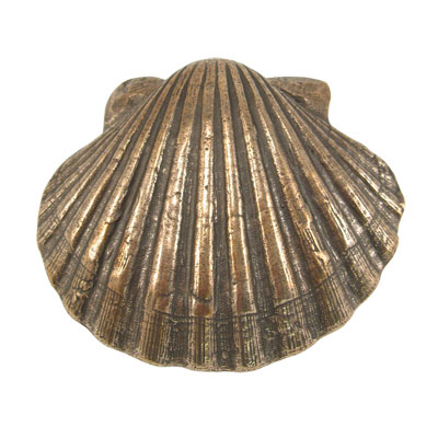 Jakobsmuschel 11 x 9 cm