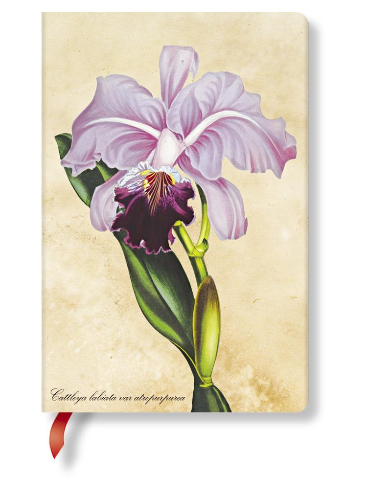 Notizbuch Brasilianische Orchidee Mini, liniert