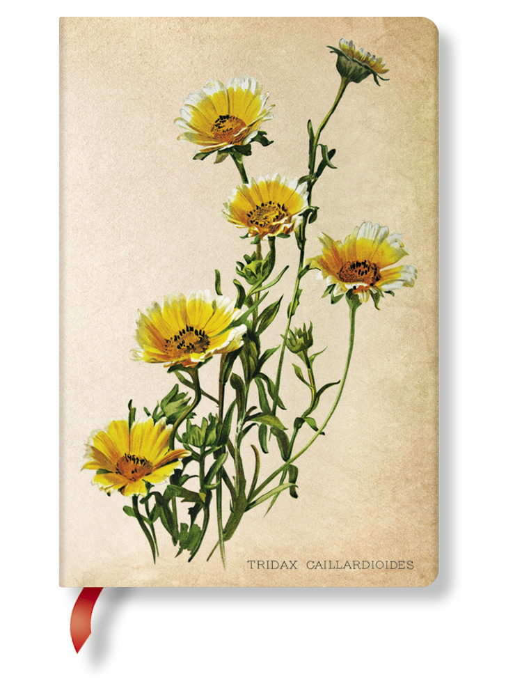 Notizbuch Gänseblumen Mini, liniert