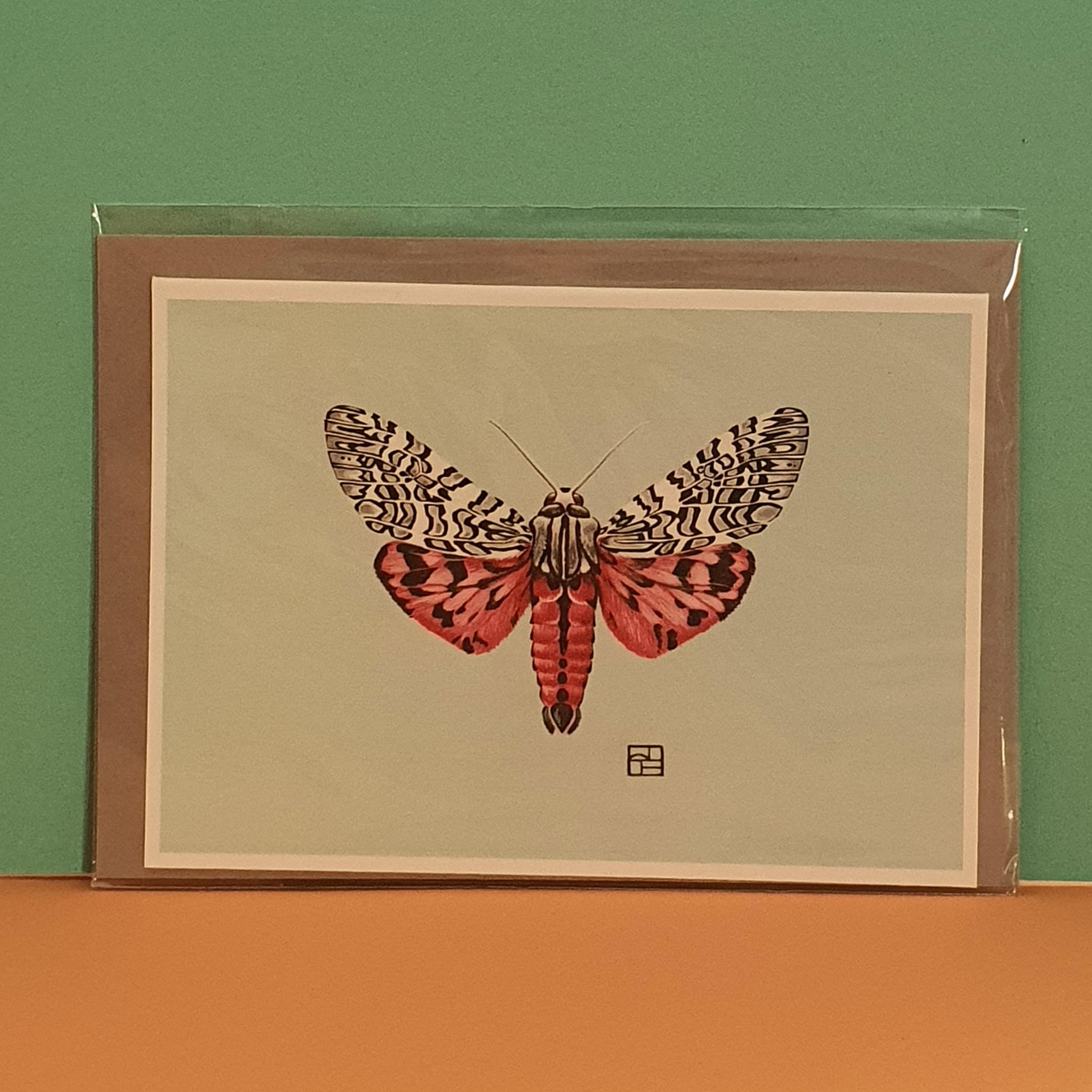 Arachnis  picta - gemalte Tigermotte