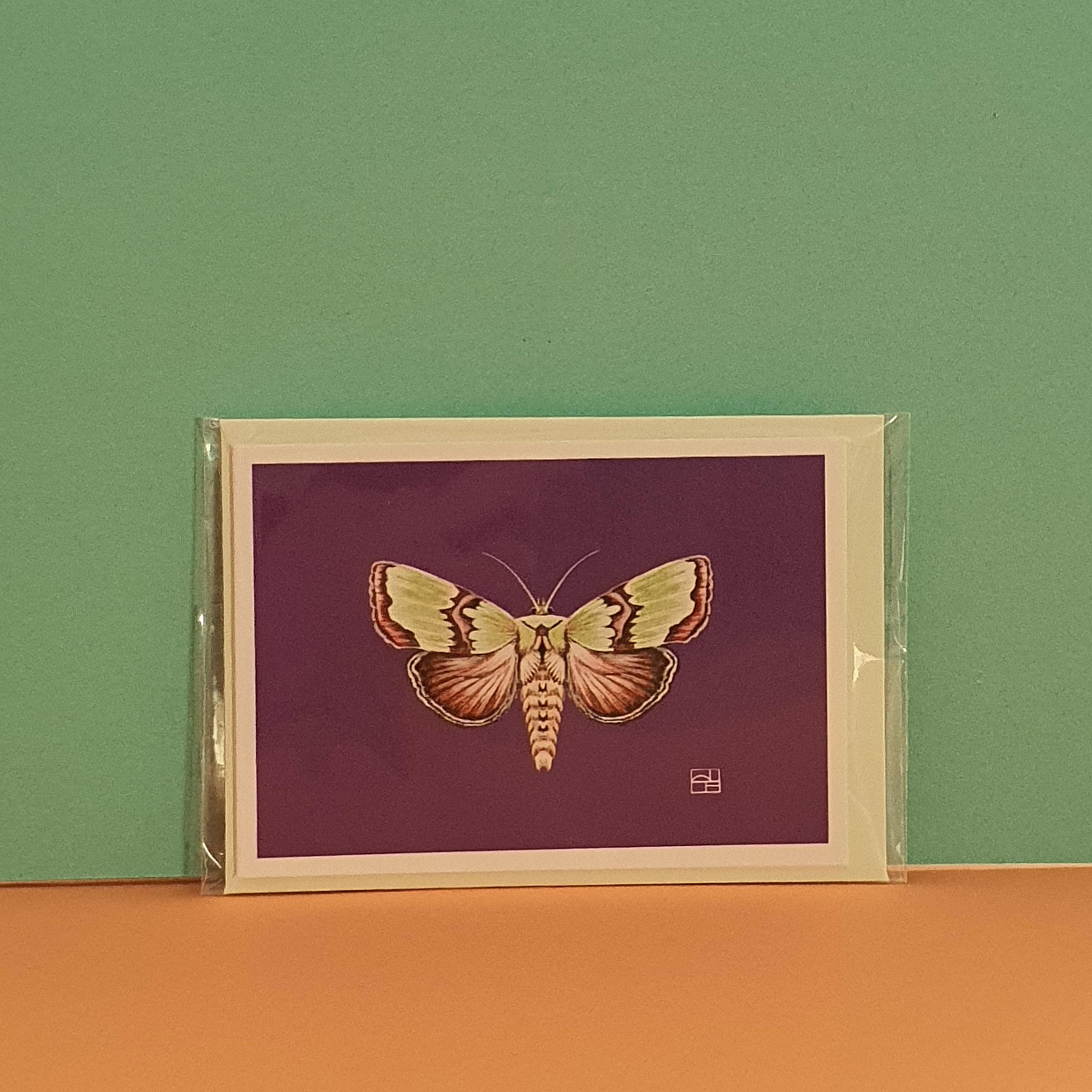 Staurophora celsia - Rostkreuz