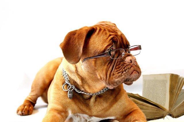 Gutschein Motiv: Hund