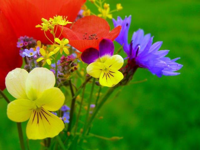 Gutschein Motiv: Blumen