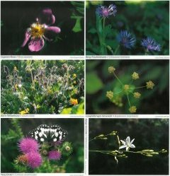 Pflanzenwelt der Schwäbischen Alb (Set)
