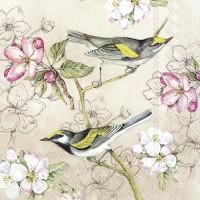 Birds Symphony